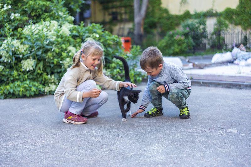 Дети играют с кошкой