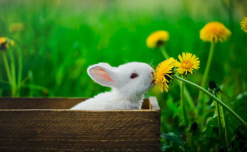Белый кролик ест цветок