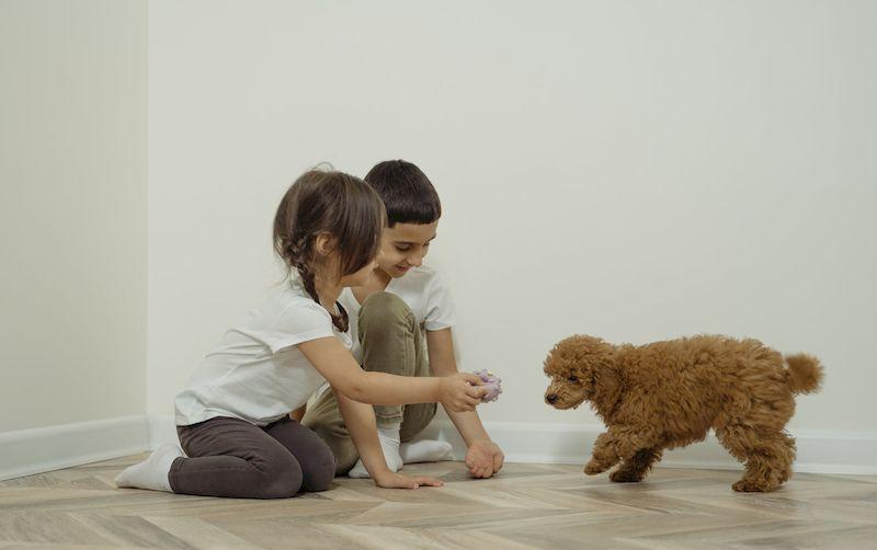 Дети играют со щенком