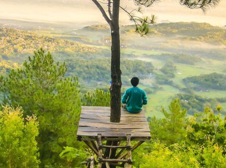 медитация в лесу на дереве